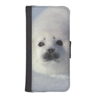 Harp seal Phoca groenlandica) A week-old harp Phone Wallets