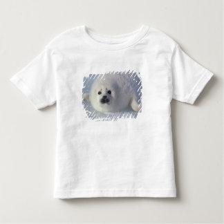 Harp seal Phoca groenlandica) A week-old harp Toddler T-shirt