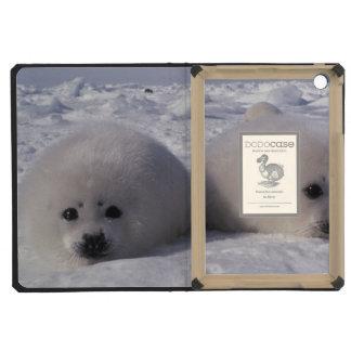 Harp seal (Phoca groenlandica) Harp seal pups iPad Mini Retina Cover
