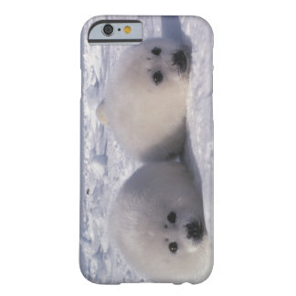 Harp seal (Phoca groenlandica) Harp seal pups Barely There iPhone 6 Case