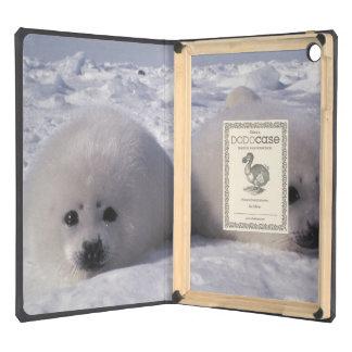 Harp seal (Phoca groenlandica) Harp seal pups Cover For iPad Air