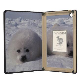 Harp seal (Phoca groenlandica) Harp seal pups iPad Mini Cover