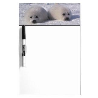 Harp seal (Phoca groenlandica) Harp seal pups Dry Erase Board