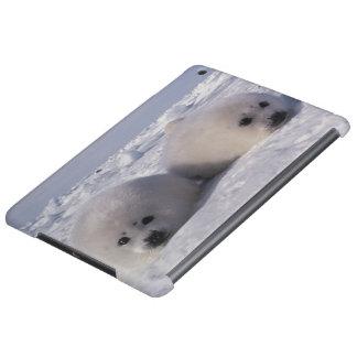 Harp seal (Phoca groenlandica) Harp seal pups iPad Air Cases