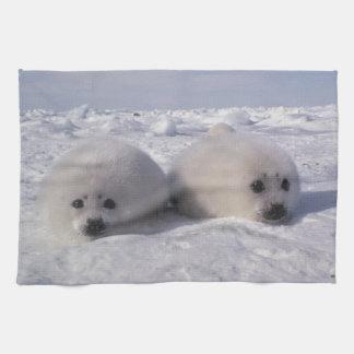 Harp seal (Phoca groenlandica) Harp seal pups Kitchen Towels