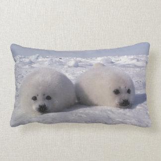 Harp seal (Phoca groenlandica) Harp seal pups Lumbar Pillow