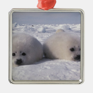 Harp seal (Phoca groenlandica) Harp seal pups Metal Ornament
