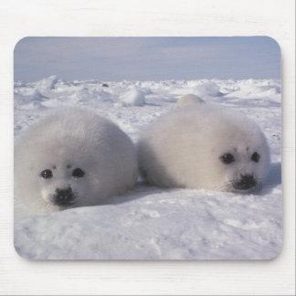 Harp seal (Phoca groenlandica) Harp seal pups Mouse Pad