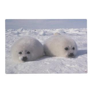 Harp seal (Phoca groenlandica) Harp seal pups Laminated Place Mat