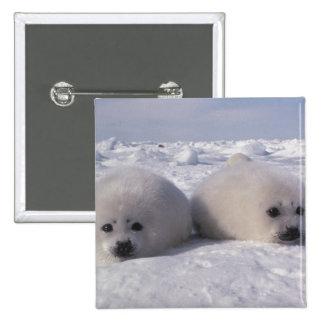 Harp seal (Phoca groenlandica) Harp seal pups Pinback Button
