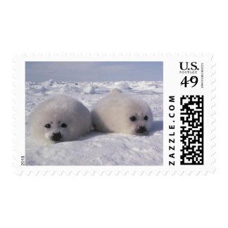 Harp seal (Phoca groenlandica) Harp seal pups Postage Stamp