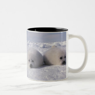 Harp seal (Phoca groenlandica) Harp seal pups Two-Tone Coffee Mug