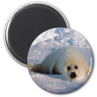 Harp Seal Pup 2 Inch Round Magnet