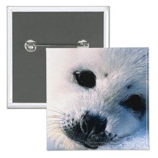 Harp seal pup 2 pinback button