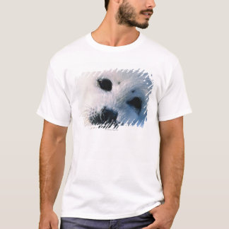 Harp seal pup 2 T-Shirt