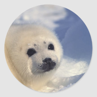 Harp Seal Pup Classic Round Sticker
