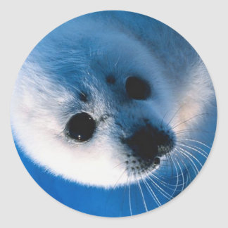 Harp Seal Pup Close-Up Classic Round Sticker