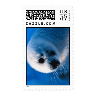Harp Seal Pup Close-Up Postage