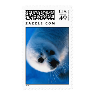 Harp Seal Pup Close-Up Postage Stamp