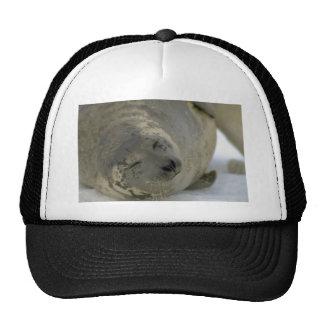 Harp seal pup trucker hats