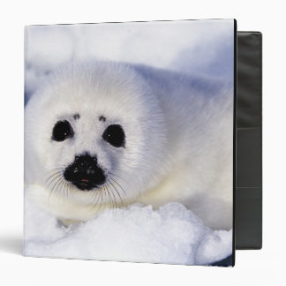 Harp seal pup ice Gulf of St. Lawrence, Binder