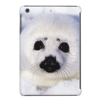 Harp seal pup ice Gulf of St. Lawrence, iPad Mini Covers