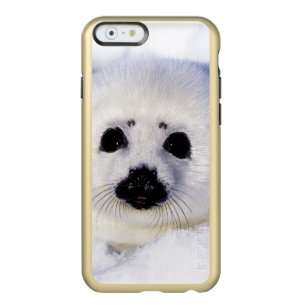 Harp seal pup ice Gulf of St. Lawrence, Incipio Feather Shine iPhone 6 Case