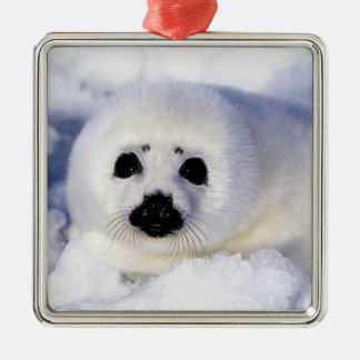 Harp seal pup ice Gulf of St. Lawrence, Metal Ornament