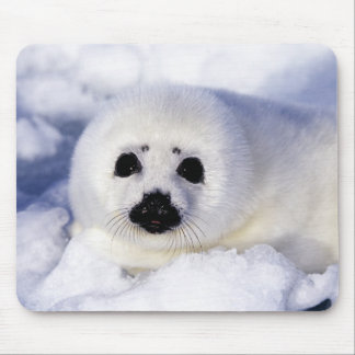 Harp seal pup ice Gulf of St. Lawrence, Mouse Pad