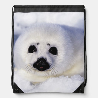 Harp seal pup ice Gulf of St. Lawrence, Drawstring Bags
