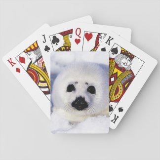 Harp seal pup ice Gulf of St. Lawrence, Playing Cards