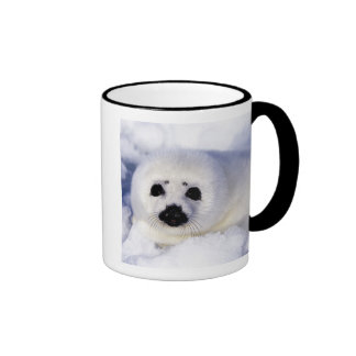 Harp seal pup ice Gulf of St. Lawrence, Ringer Mug
