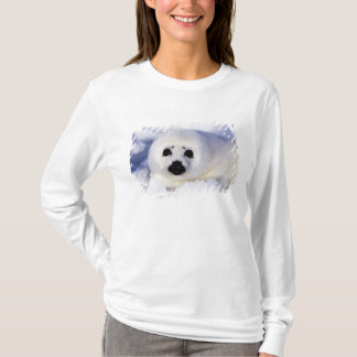 Harp seal pup ice Gulf of St. Lawrence, T-Shirt