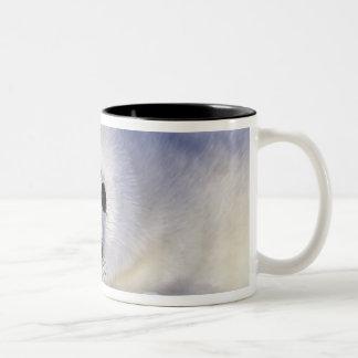 Harp seal pup ice Gulf of St. Lawrence, Two-Tone Coffee Mug