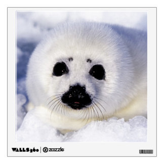 Harp seal pup ice Gulf of St. Lawrence, Wall Decal