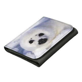 Harp seal pup ice Gulf of St. Lawrence, Wallet