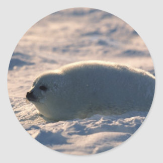 Harp Seal Pup in Snow Classic Round Sticker