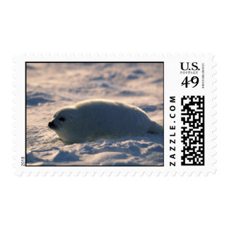 Harp Seal Pup in Snow Postage