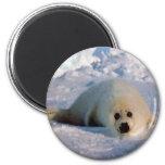 Harp Seal Pup Magnet