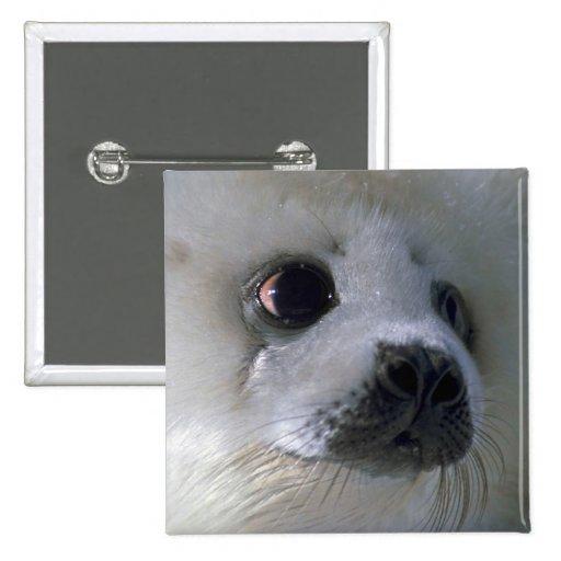 Harp seal pup pinback buttons