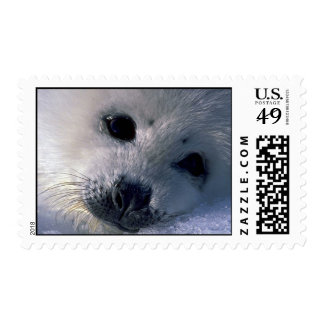 Harp seal pup stamps