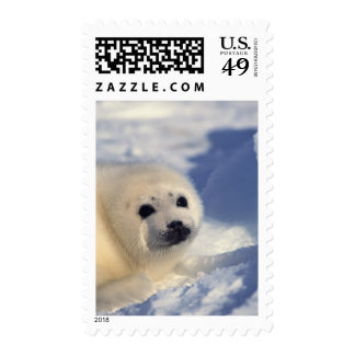Harp Seal Pup Postage Stamp