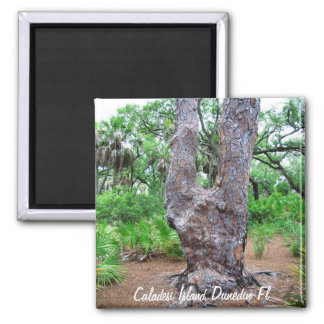 Harp Tree Caladesi Island Magnet