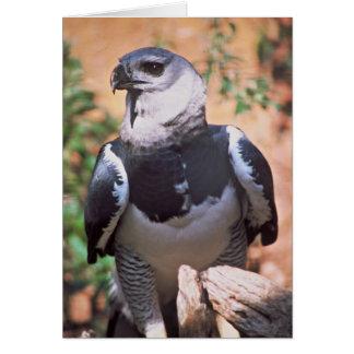 Harpey Eagle Card