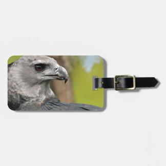 Harpy Eagle 1.JPG Luggage Tag