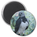 Harpy Eagle Captive 2 Inch Round Magnet