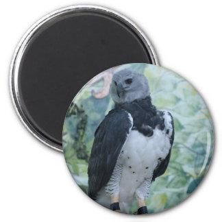 Harpy Eagle Captive Magnet