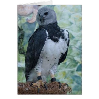 Harpy Eagle Greeting Card
