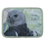 Harpy Eagle Organizer