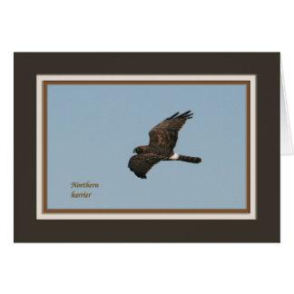 Harrier_5539 septentrional tarjeta de felicitación
